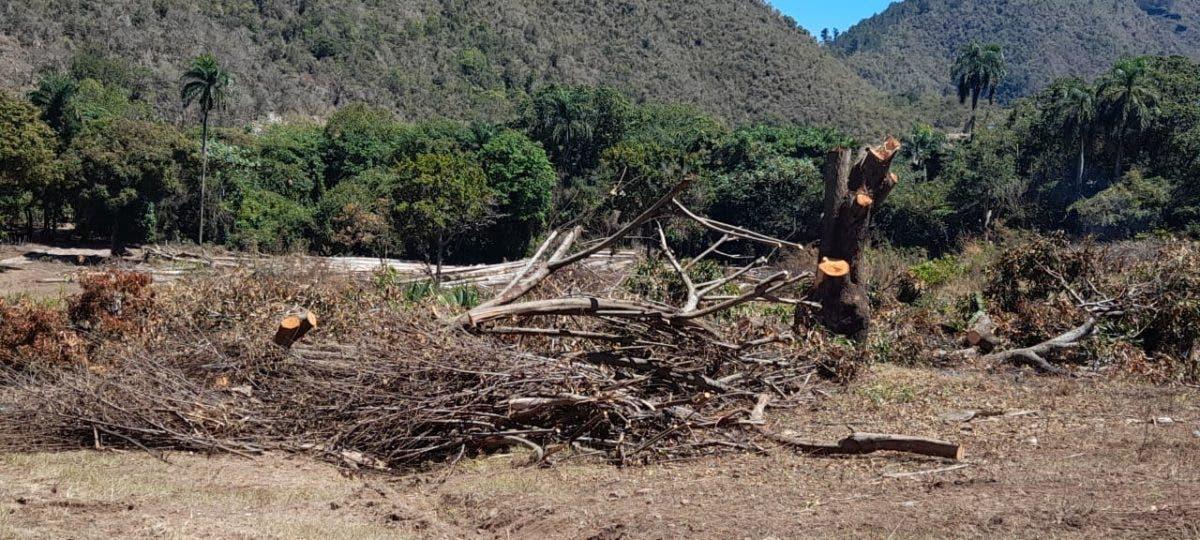 Solicitarán arresto contra hombre recibió permiso para 10 tareas y arrasa con árboles centenarios