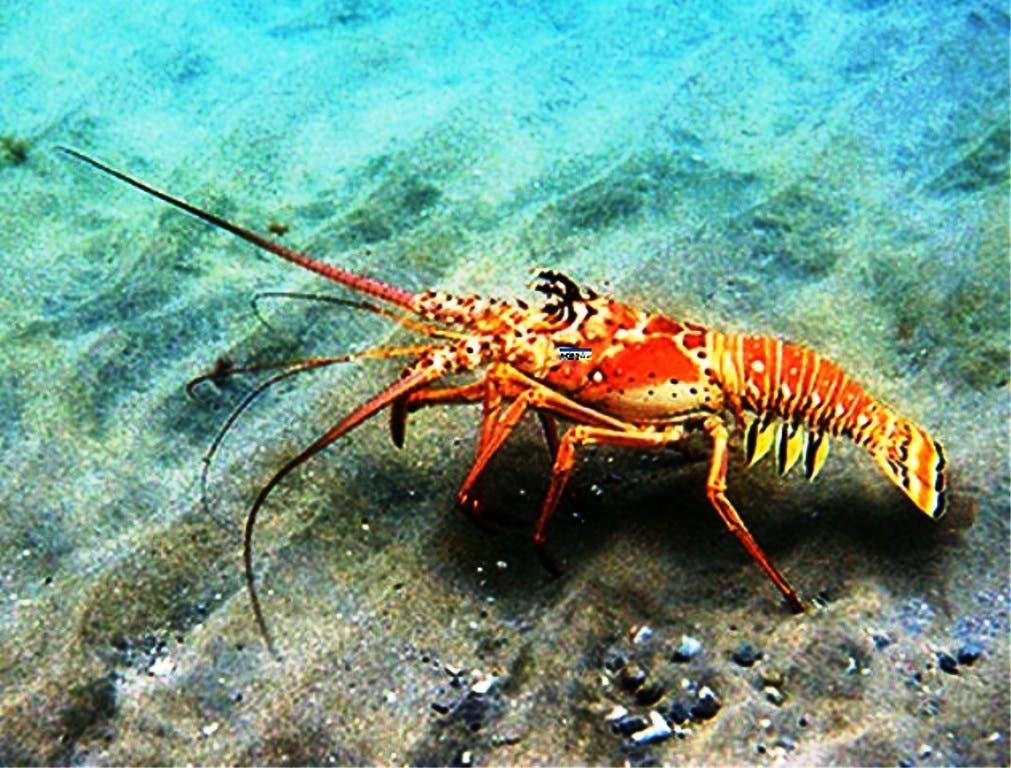¿Sabes cuáles especies acuáticas están en veda actualmente en República Dominicana?