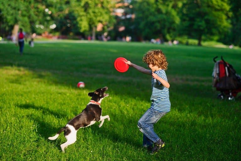 Los juegos a los que puedes jugar con tu perro