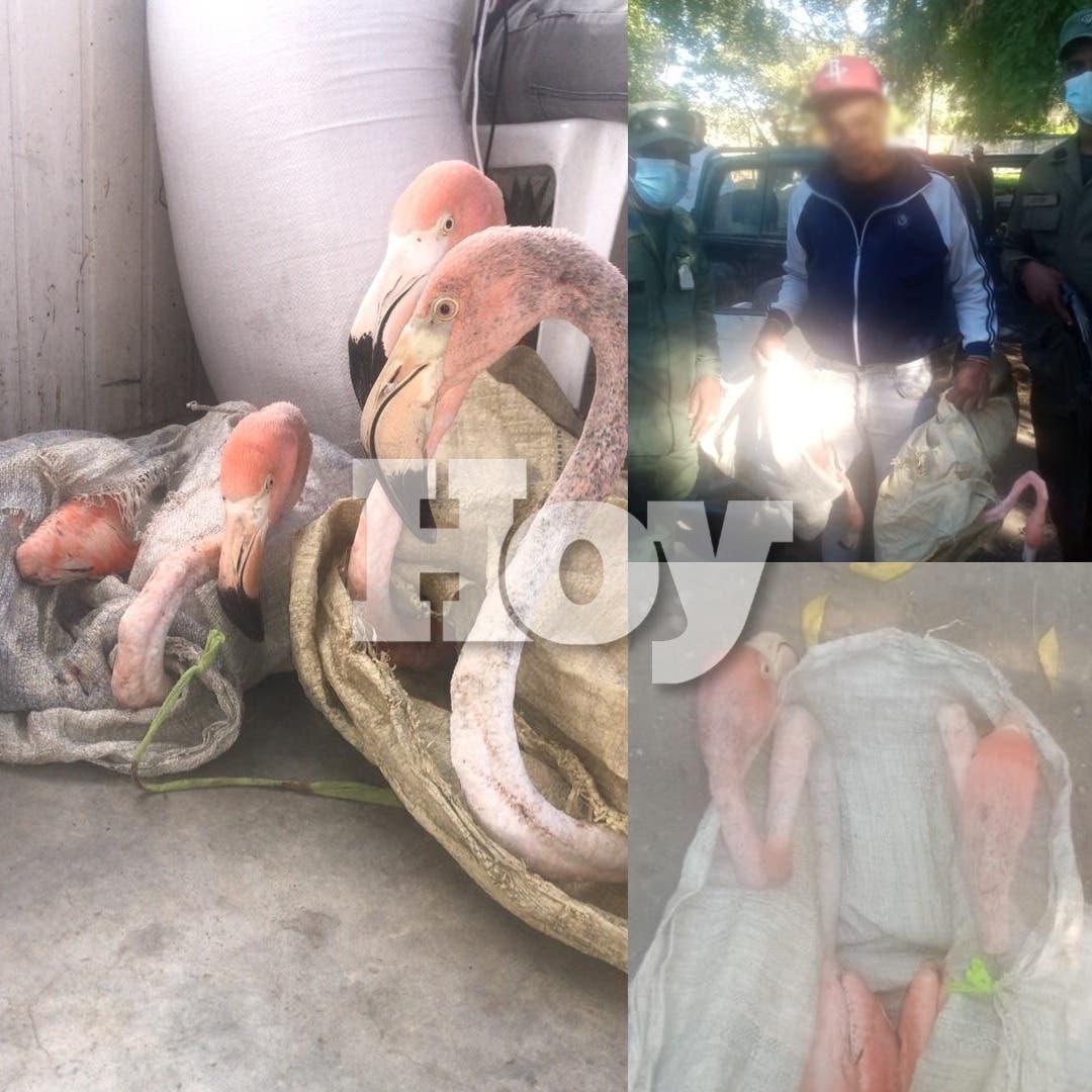 Apresan hombre transportaba cuatro flamencos de forma irregular