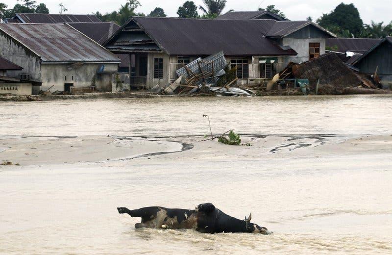 133 muertos y decenas de desaparecidos por inundaciones en Indonesia