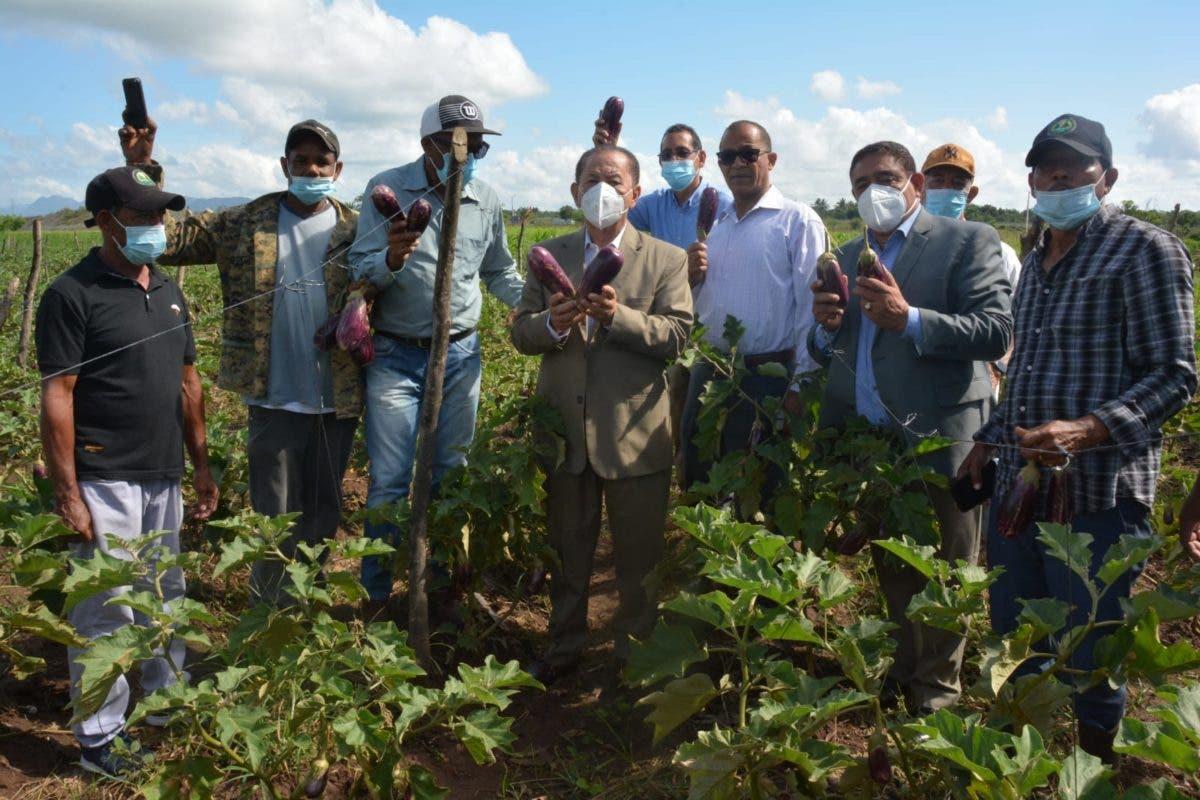 Director Feda visita proyecto de siembra de berenjena en Los Alcarrizos