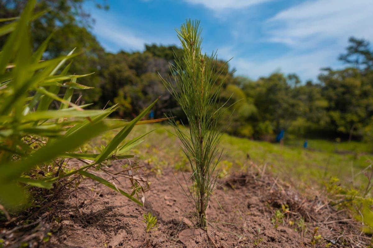 Grupo Popular siembra 1,500 árboles en el Plan Sierra