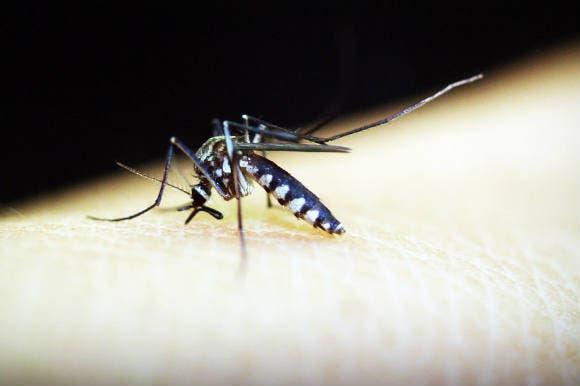 RD está entre los 25 países con capacidad para eliminar la malaria en 2025