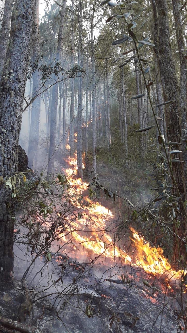 Controlan incendio en Sierra de Bahoruco