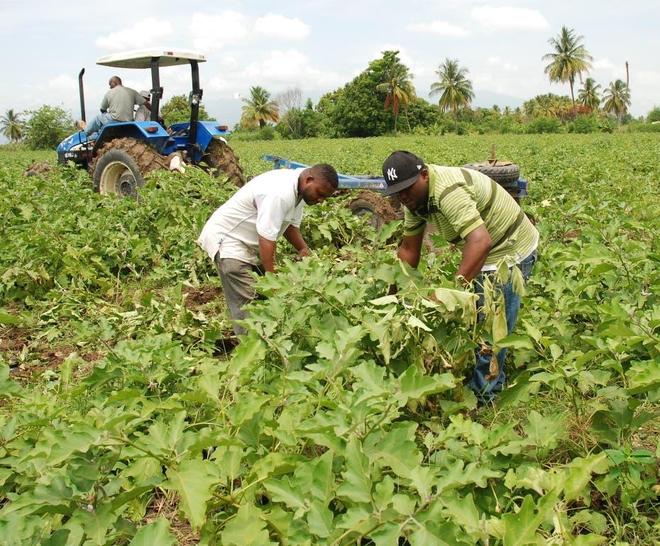 Un plan de desarrollo agrícola de exportación