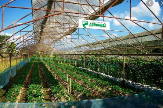 Agrodosa ha pagado más de RD$411 millones a productores y reaseguradoras