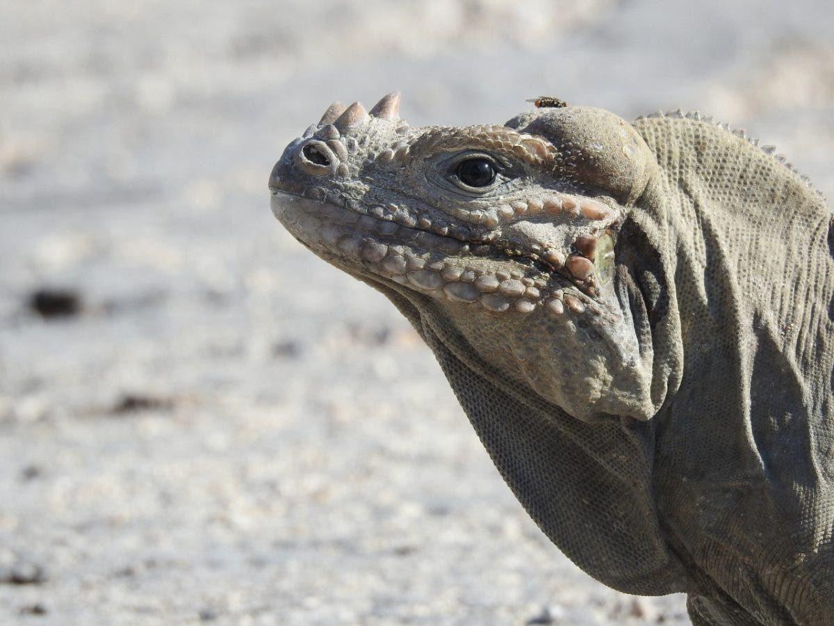 Estiman más de 10 mil especies componen biodiversidad en RD