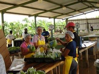 EPA, un instrumento de desarrollo y oportunidad comercial del sector bananero en República Dominicana