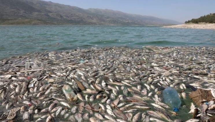 Toneladas de peces en un lago contaminado acaban a la venta en Líbano