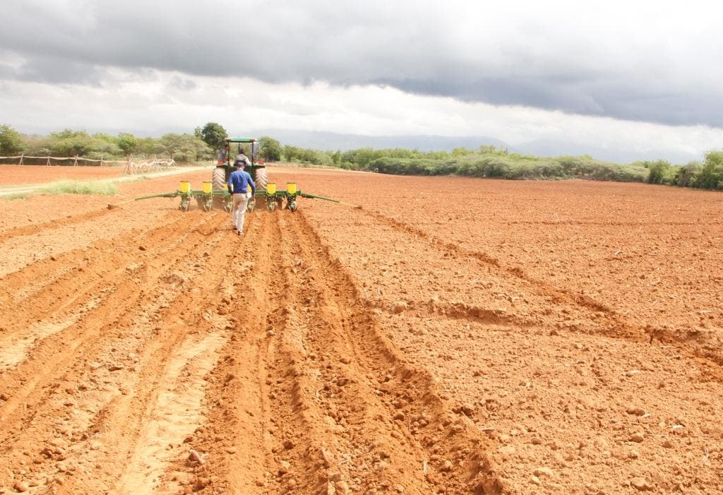 Inician siembra de mil 500 tareas de sorgo que permitirá abaratar costos de producción avícola