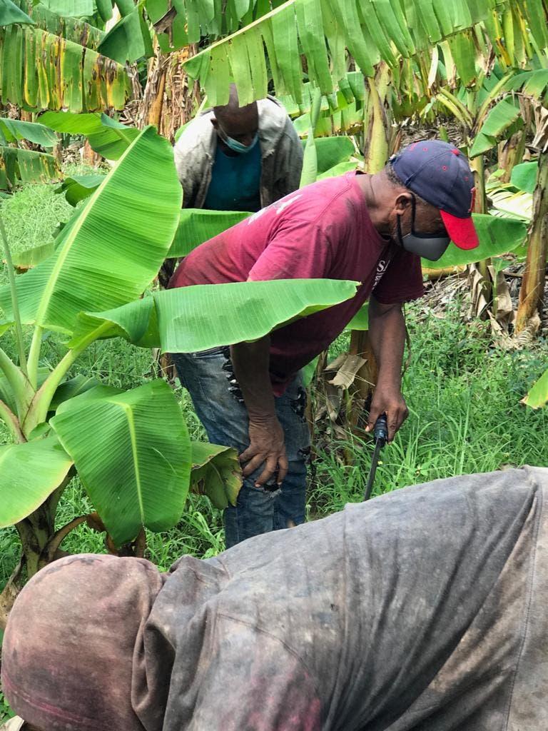Plan de desarrollo agrícola para exportación sería el mejor regalo de Abinader a agricultores