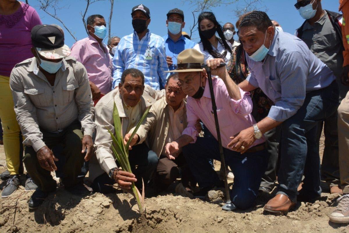 FEDA inicia siembra de 50 mil tareas de coco enano brasileño en la región Enriquillo