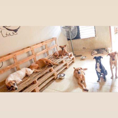 Parte de los perros de la fundación. Fuente: cuenta de Instagram de la Fundación El Edén
