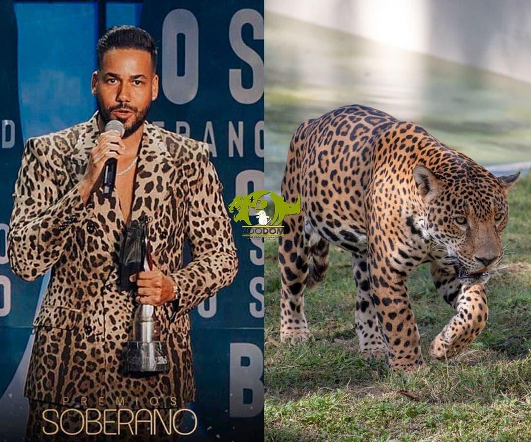 El Zoológico relaciona outfit de sus habitantes con el de famosos en Premios Soberano