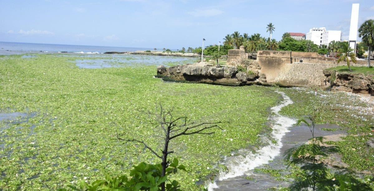 Lila y basura arropan litoral SD