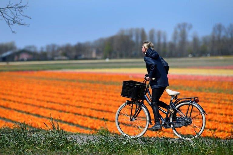 Día Mundial de la Bicicleta: por qué se celebra hoy y cuáles son los beneficios para la salud