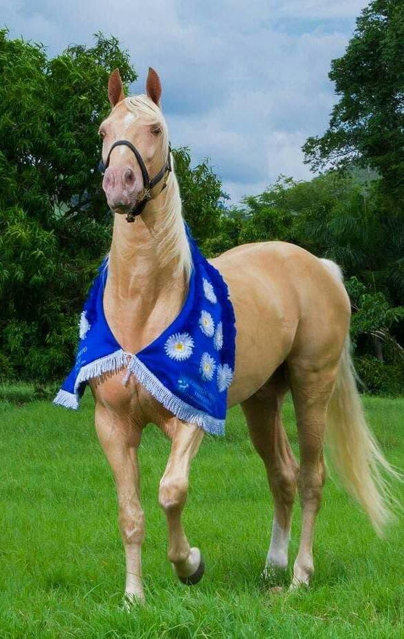 Piden aprobar proyecto que declara al caballo de paso raza nacional