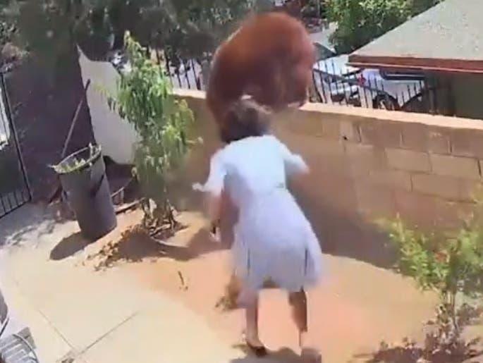 Viral el video de adolescente que enfrenta oso para defender a sus perros