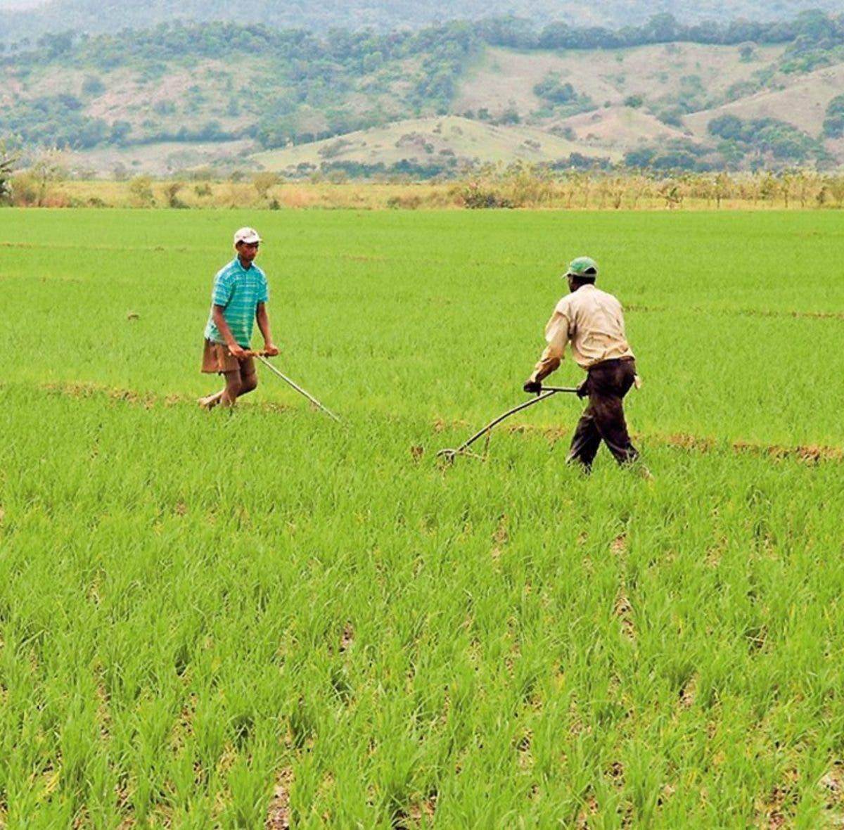 FAO recomienda establecer agricultura familiar en ley de compras públicas