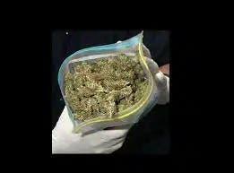 Decomisan 2,054 libras de marihuana