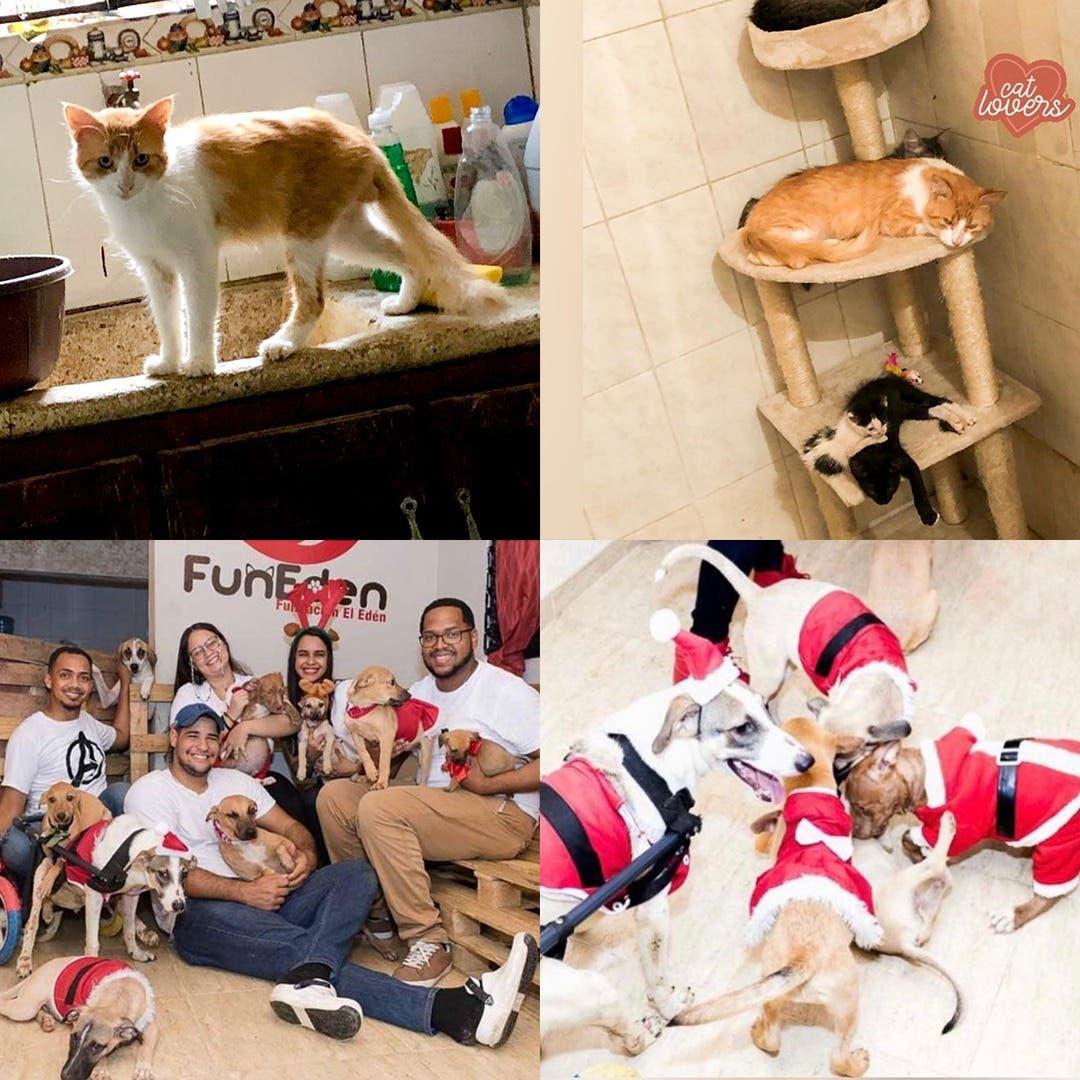 Fundación El Edén lucha por los animales callejeros. ¡Únete a la causa!