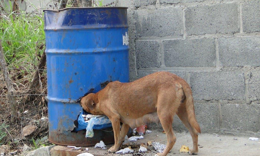 27 de julio: Día Internacional del Perro «Vira lata»