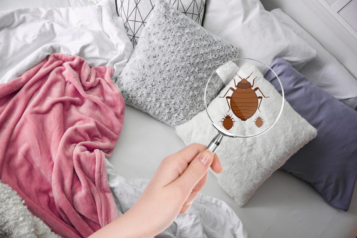 Qué se esconde bajo nuestras sábanas (y por qué no suelen estar tan limpias como parece)