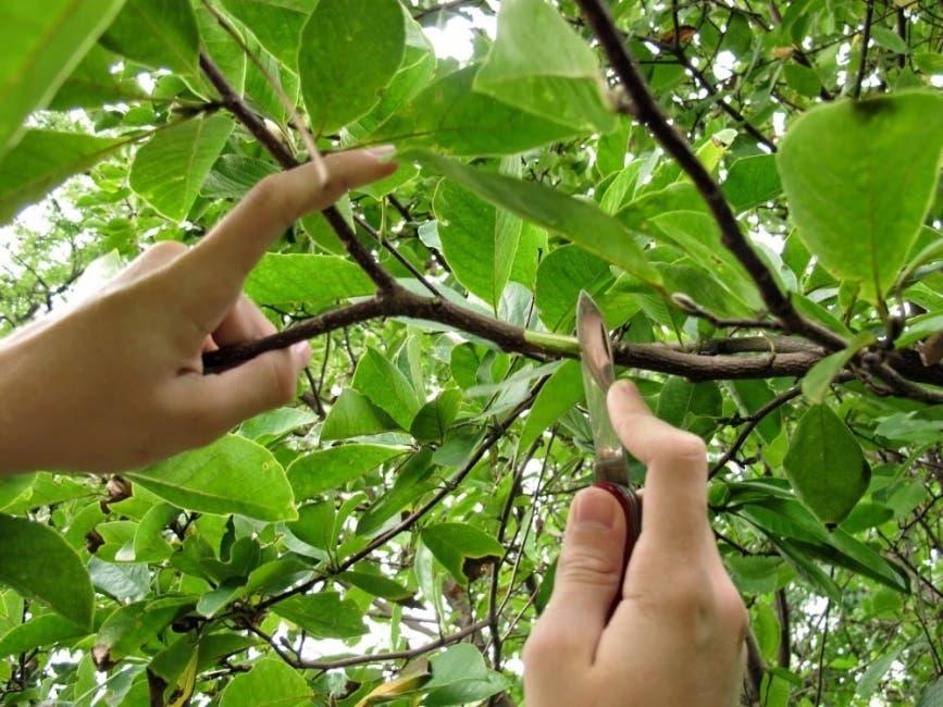 Intentaba cortar una rama cuando se electrocutó en Yamasá