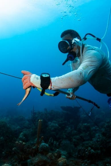 Seguridad; APAP auspicia estudio revela malas prácticas pescadores