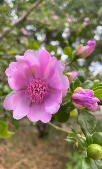 Medio Ambiente Proyecto: Buscan conservar la Rosa de Bayahíbe