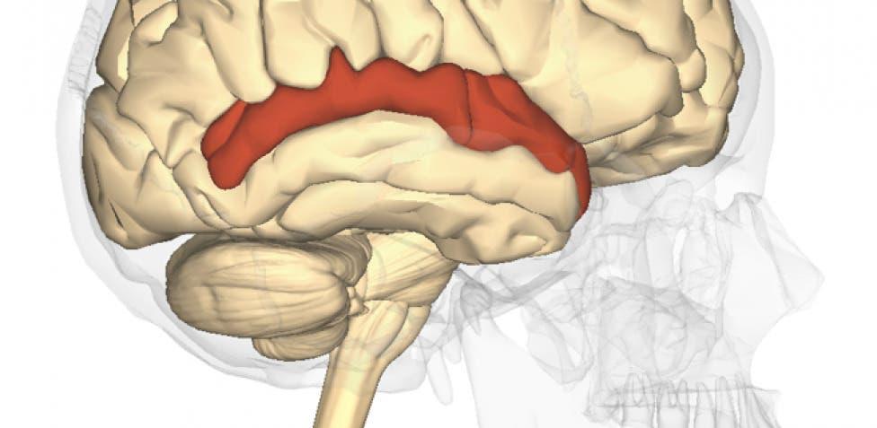 Sonidos y palabras se procesan en el cerebro por separado