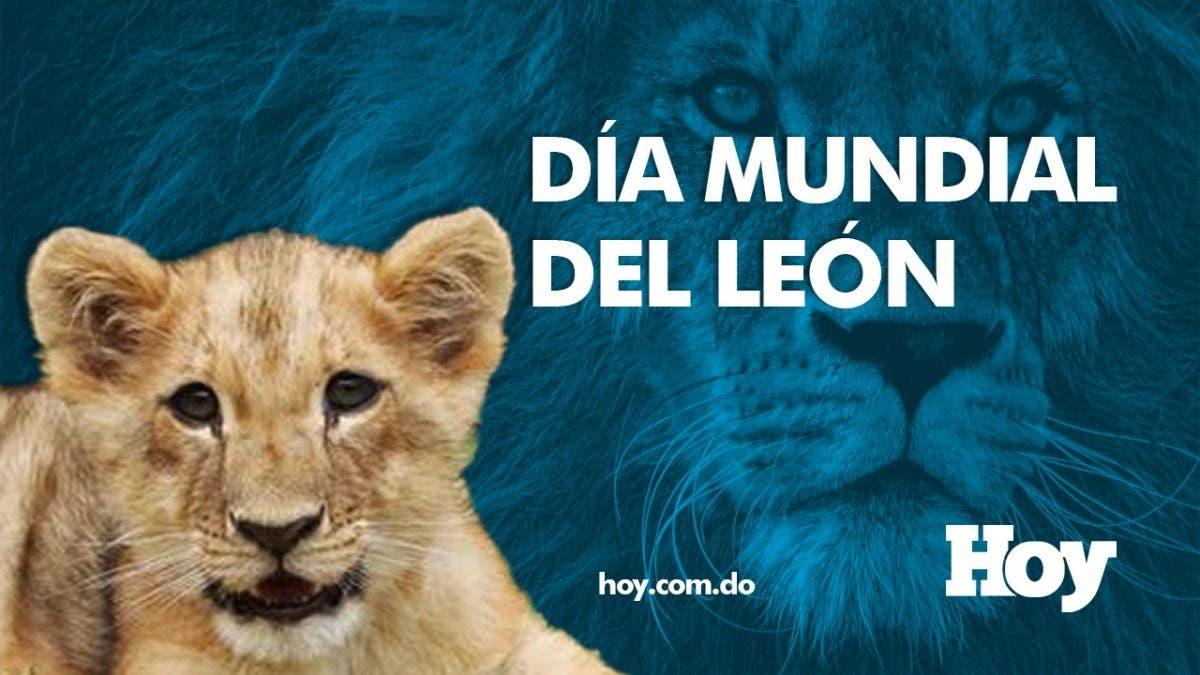 Día Mundial del León ¿Por qué se celebra hoy?
