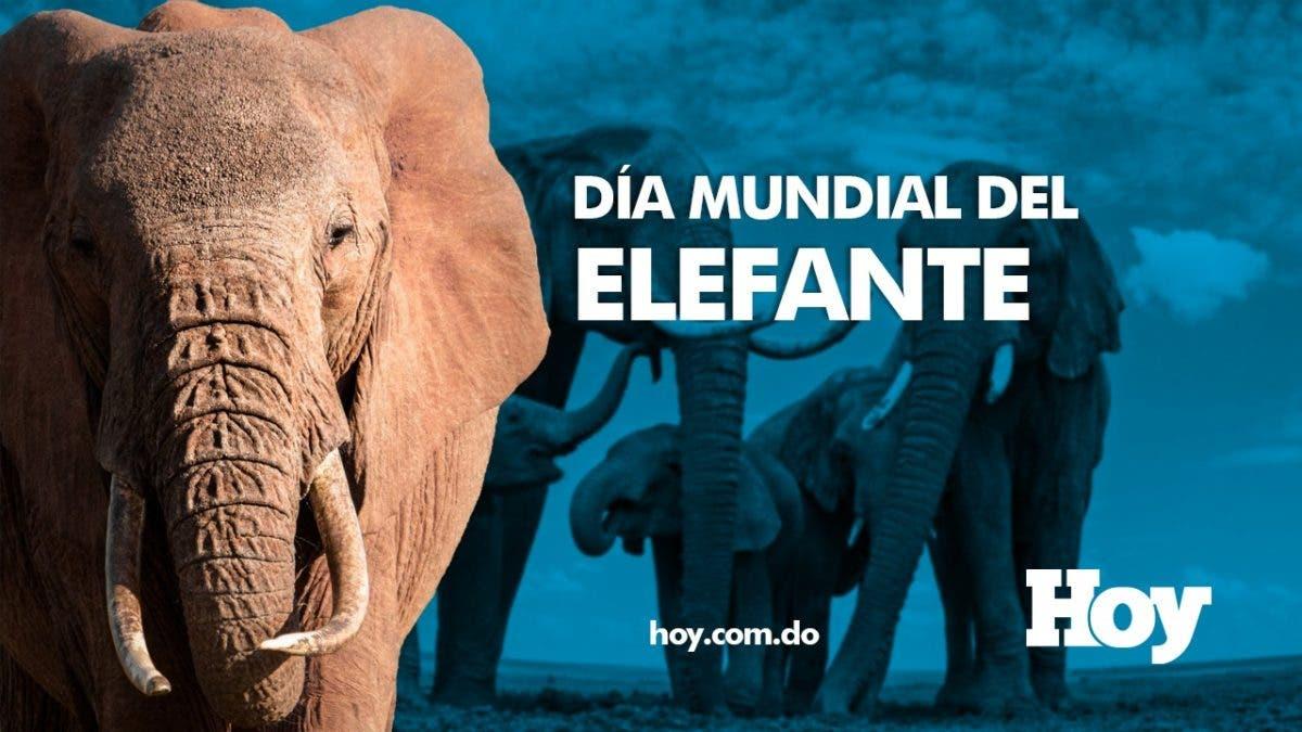 Día Mundial del Elefante, ¡conoce sobre ellos!