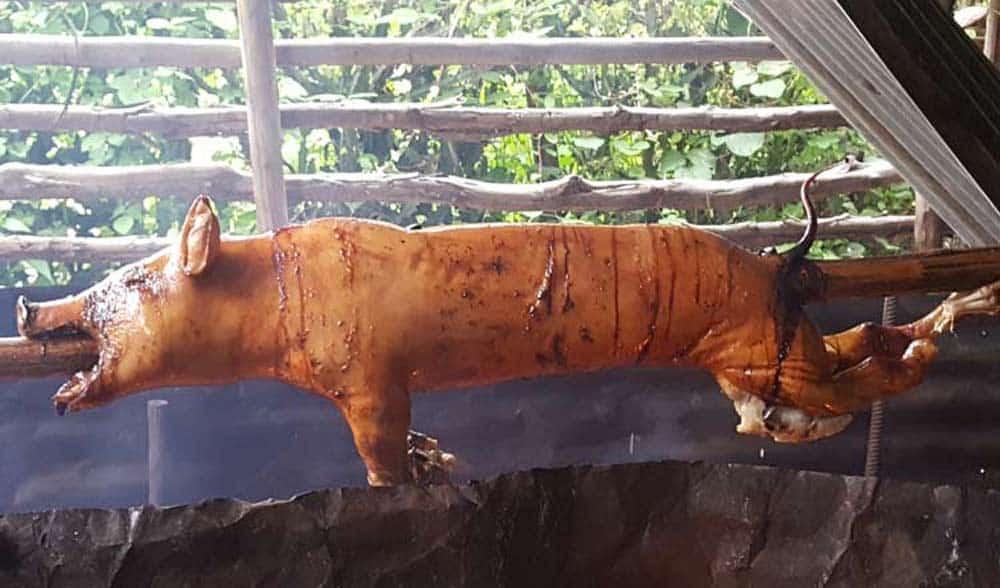 Cerdo de Navidad no está en peligro pero hay que erradicar peste porcina africana