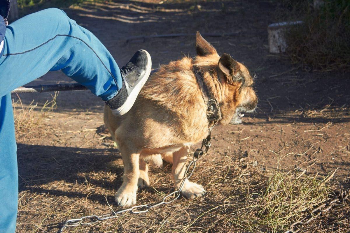 VIDEO: Hombre arrastra animal con «lazo o cadena» atada a su cuello