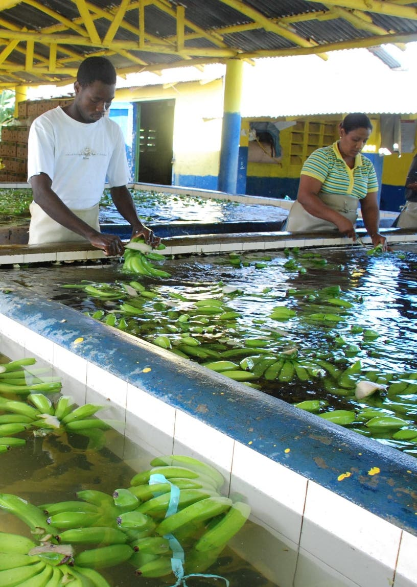 Bananeros piden Abinader le compre barcazas por US$40 MM