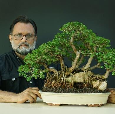 Realizarán exposición de más de 60 bonsáis