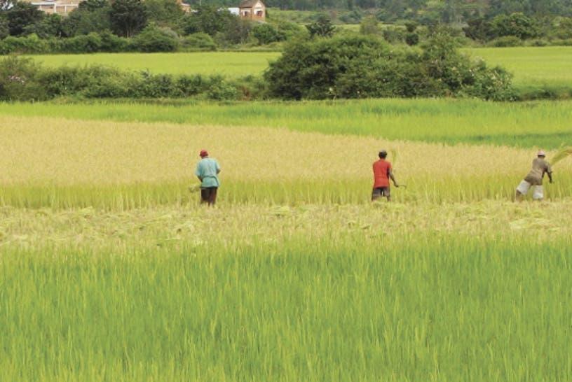 Repatriación de haitianos afecta al sector agropecuario