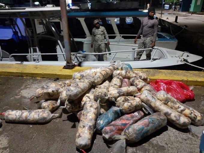 Incautan más de media tonelada de peces loros y lambíes en Samaná