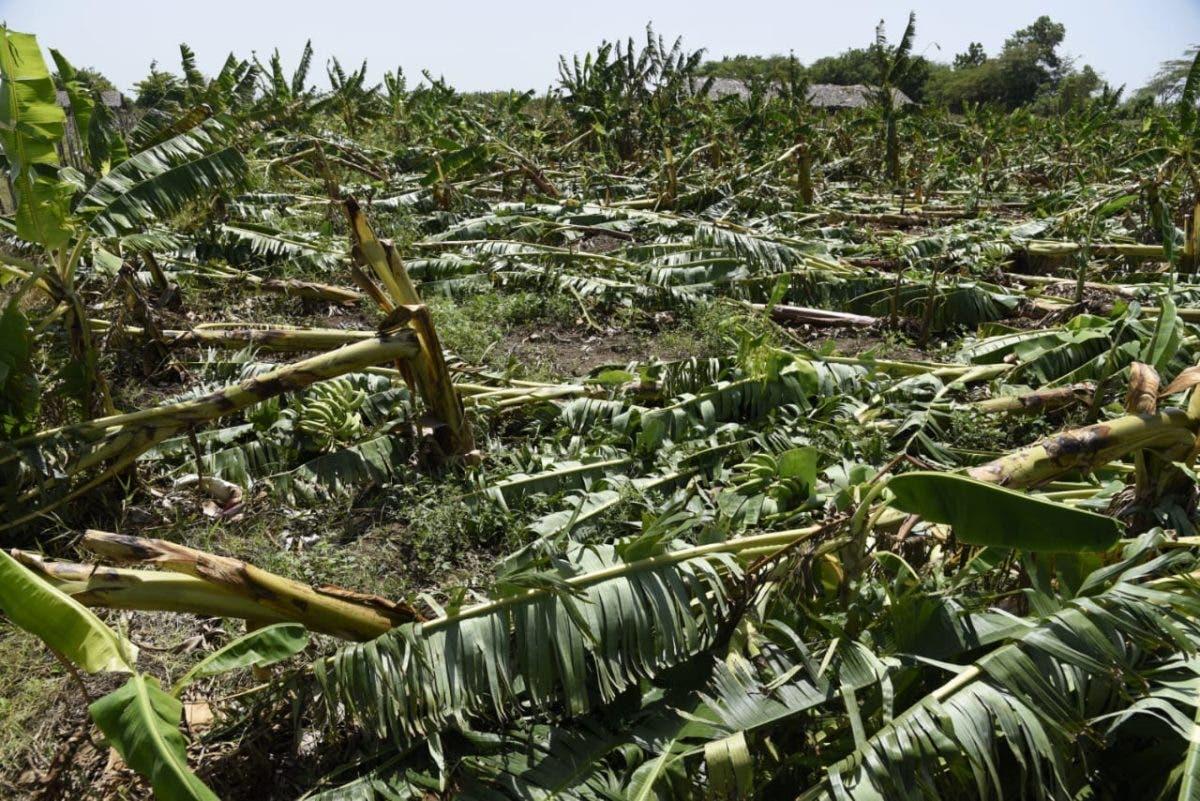 Gobierno promete ayuda económica a productores de plátanos afectados por tornado