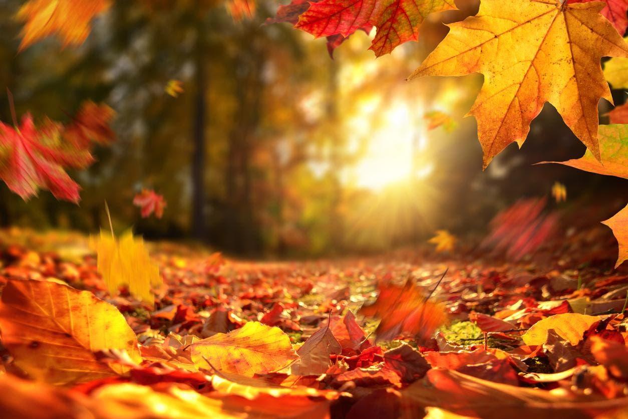 Este miércoles inicia el otoño; las noches serán mas largas
