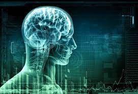 Médicos españoles descubren cómo el cerebro modula la actividad del corazón