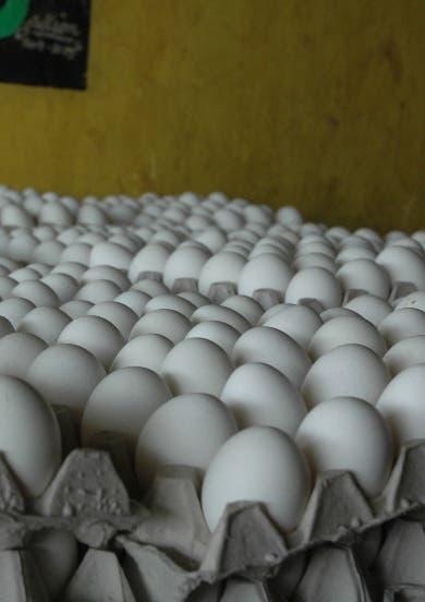 Piden dejar traer pollitas reproductoras de huevo