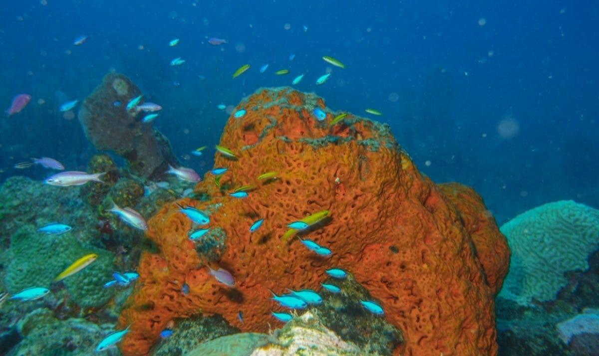 US$1,142 millones genera los servicios arrecifes coral en RD