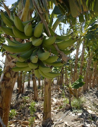 Bodegueros E.U piden agilizar exportaciones