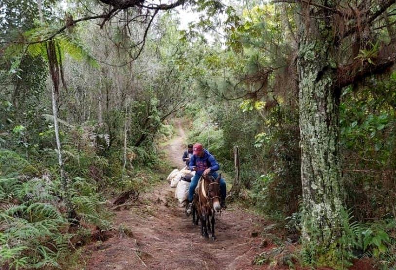 RD tiene 42% bosque frente al 2% de Haití