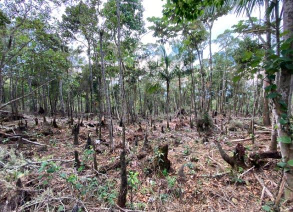 Medio Ambiente somete a exalcalde de Barahona por desmonte de árboles en área protegida