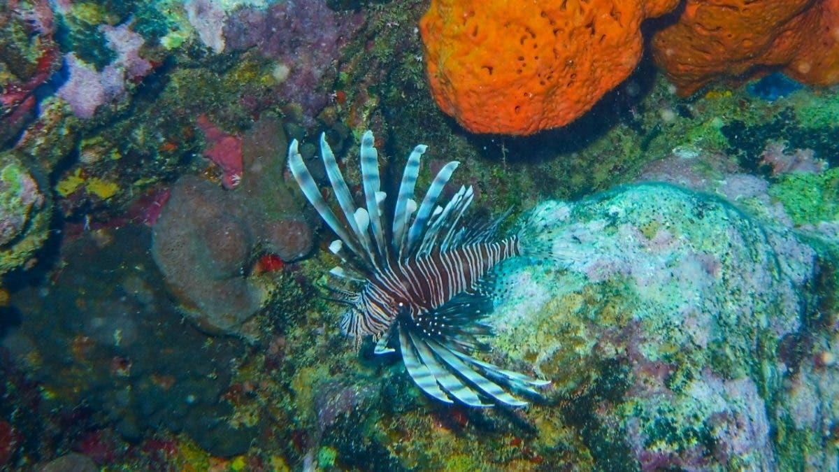 Actividades en torno a los arrecifes de coral en los polos turísticos generan más de mil millones de dólares al año
