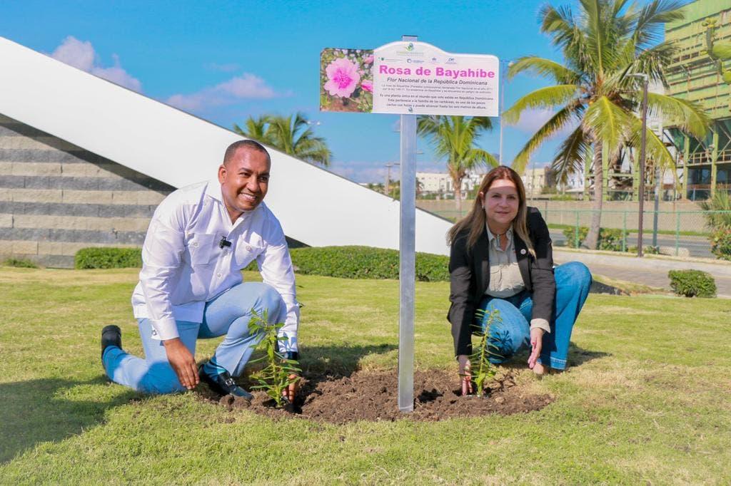 """Promueven la Flor Nacional «Rosa de Bayahíbe"""" en aeropuertos del país"""